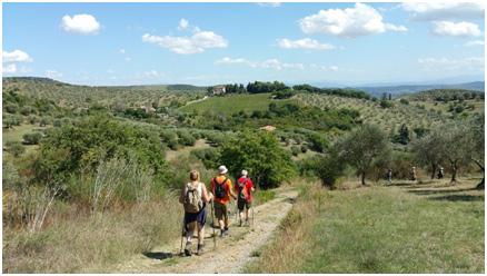 Trasimeno-Trekking-camminando-tra-gli-olivi