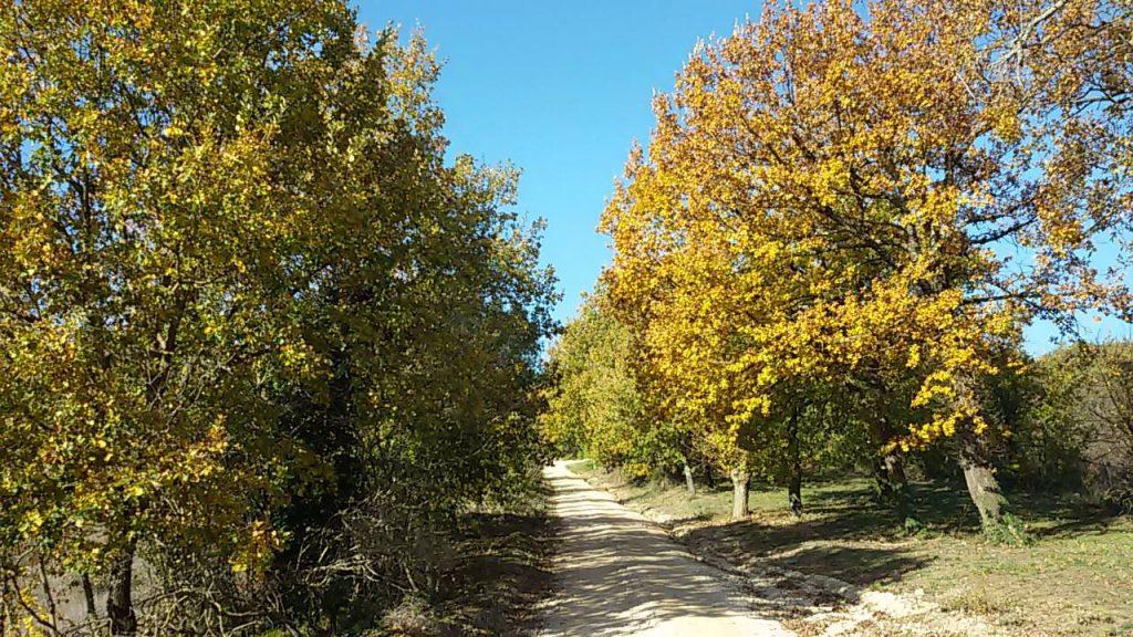 Escursione a Collazzone